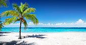 Single Coconut Palm Tree On White Sand and Caribbean Sea