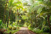 This is a horizontal, color, royalty free stock photograph of a one lane, rural dirt road lined on both sides with trees and tropical forest vegetation near Pahoa on the Big Island of Kona in the US H