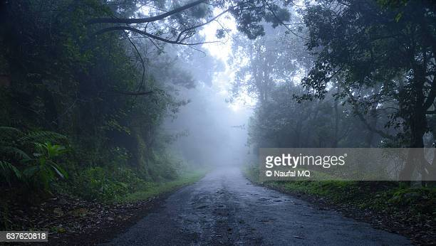 Scenic forest road in Kodaikanal