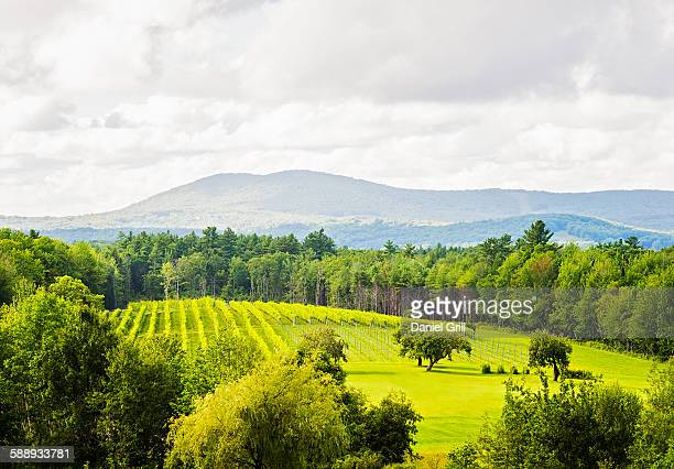 Scenic green landscape under cloudy sky