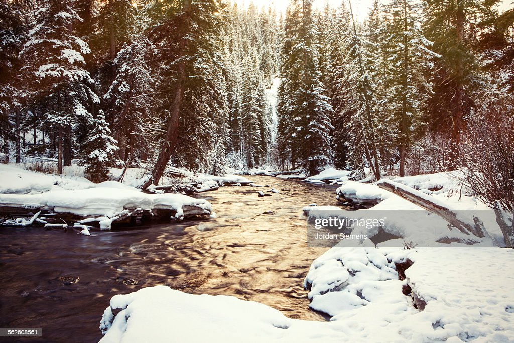 Scenic image of a creek in nature