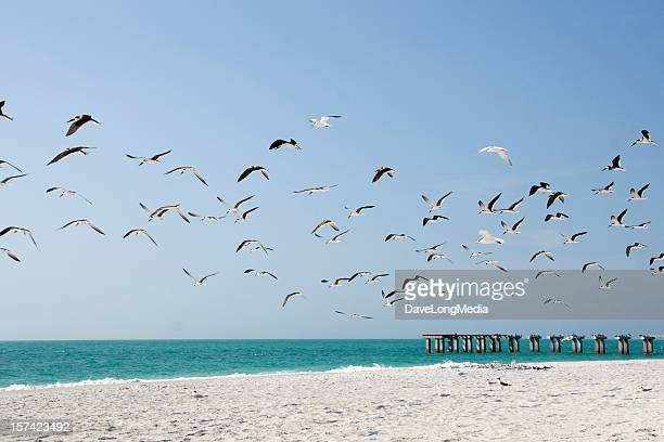 Scenic photographic of birds flying over a beach