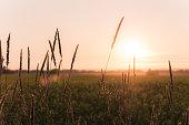 Grain and sunset sky.