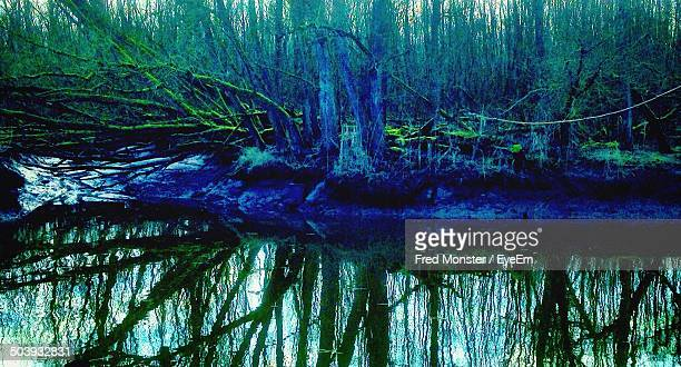 Scenic shot of reflection of tree trunks in calm lake