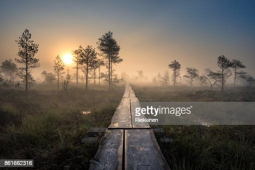 Scenic view from swamp with wooden path at autumn morning in Torronsuo National park, Finland : Foto de stock