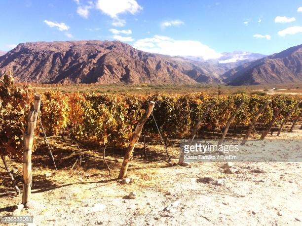 Scenic View Of Agricultural Field And Mountains Against Sky