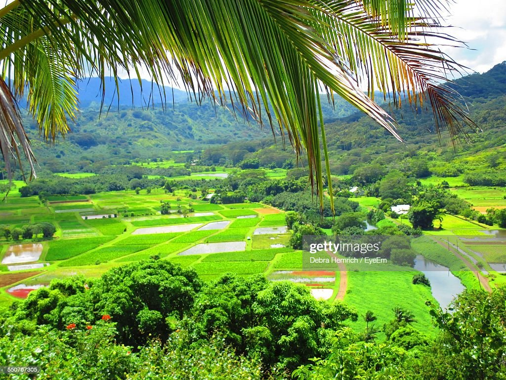 Scenic View Of Agricultural Field By Mountains
