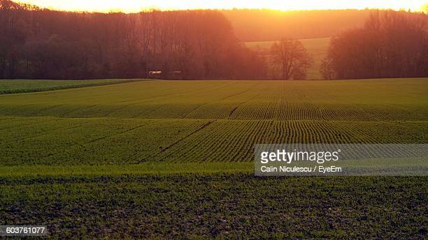 Scenic View Of Agricultural Field During Sunrise