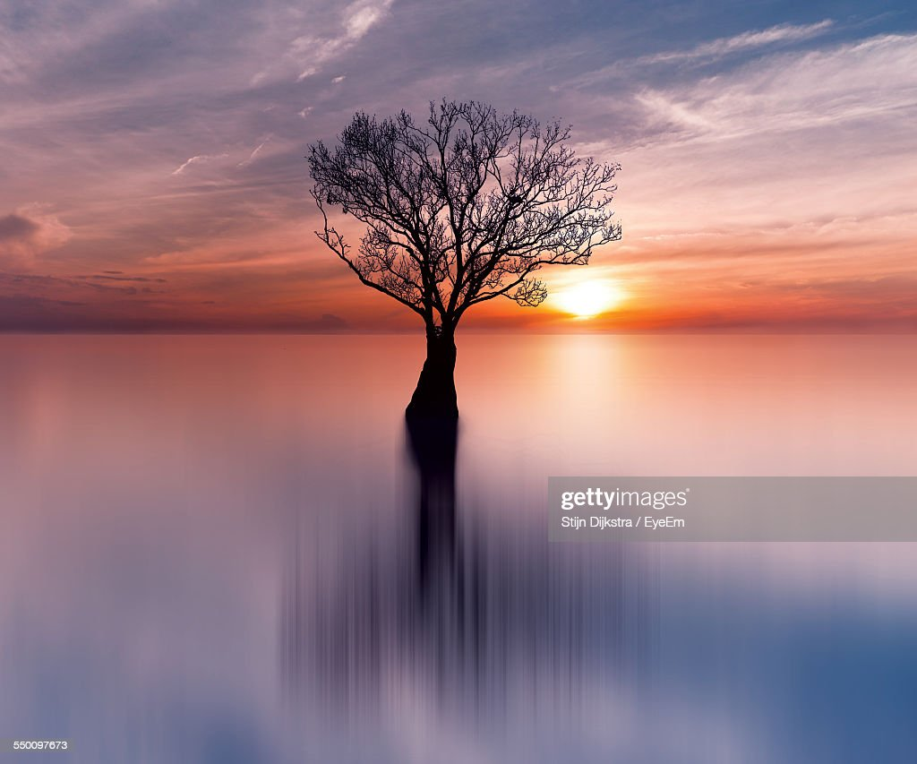Scenic View Of Bare Tree On Sea Against Sky During Sunset