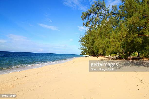 Scenic View Of Beach By Trees Against Blue Sky