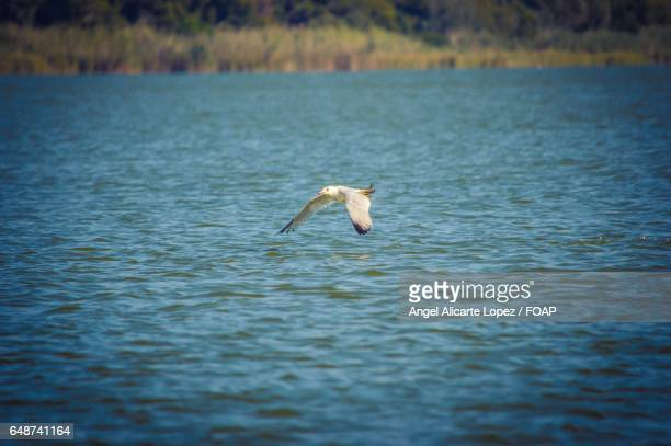 Scenic view of bird flying over lake
