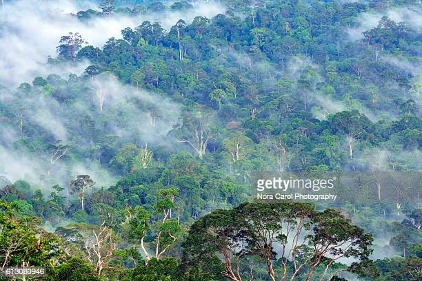Scenic view of Borneo rain forest in Danum Valley Conservation Area.