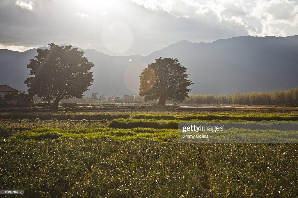 Scenic view of China : Stock Photo