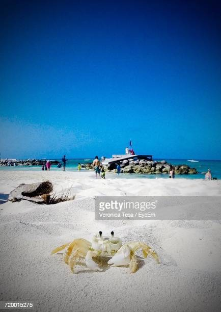 Scenic View Of Crab On Sand Against Clear Sky