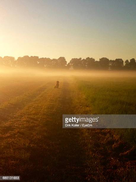 Scenic View Of Dirt Road On Landscape During Foggy Sunrise
