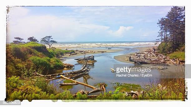 Scenic View Of Driftwood At Seaside
