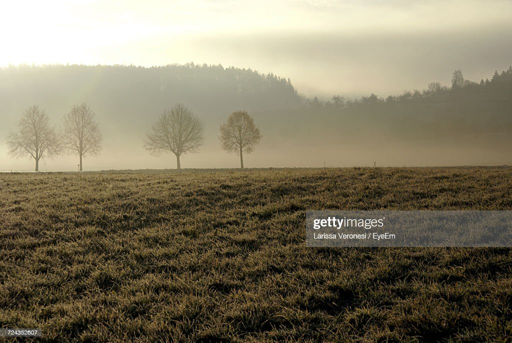Scenic View Of Field Against Sky : Stock-Foto