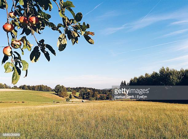 Scenic View Of Field Against Sky With Apple Twig