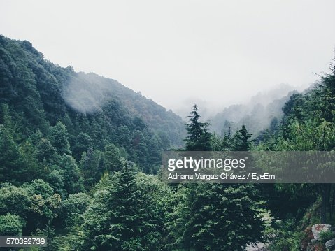 Scenic View Of Forest Against Sky During Monsoon