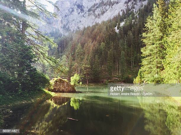 Scenic View Of Forest By Lake