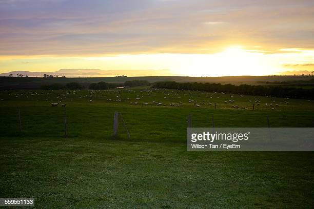 Scenic View Of Grassy Landscape Against Cloudy Sky At Sunset