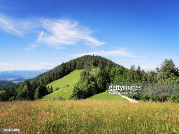 Scenic View Of Green Landscape Against Blue Sky