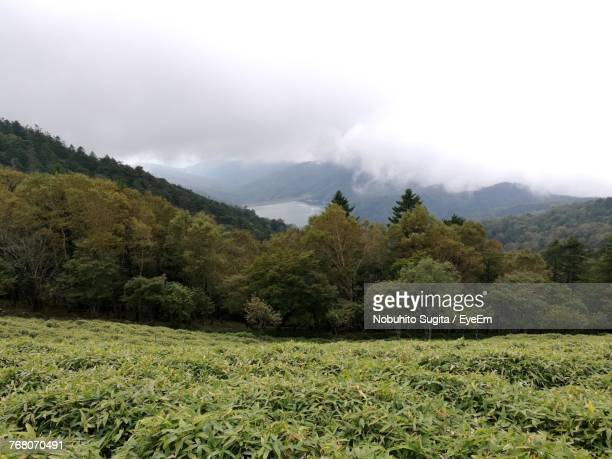 Scenic View Of Green Landscape And Mountains Against Sky