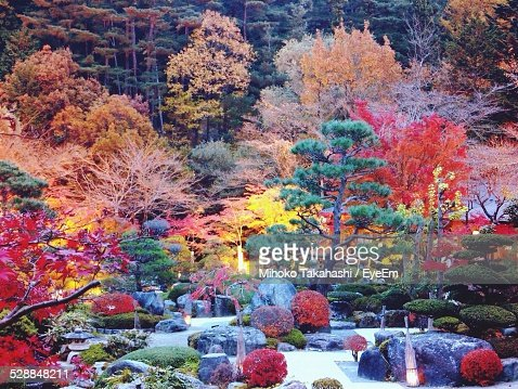Scenic View Of Japanese Garden During Autumn