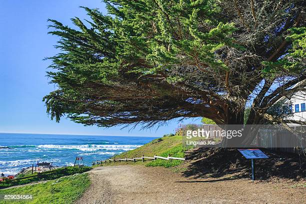 Scenic View of Pacific Ocean with Giant Tree, California
