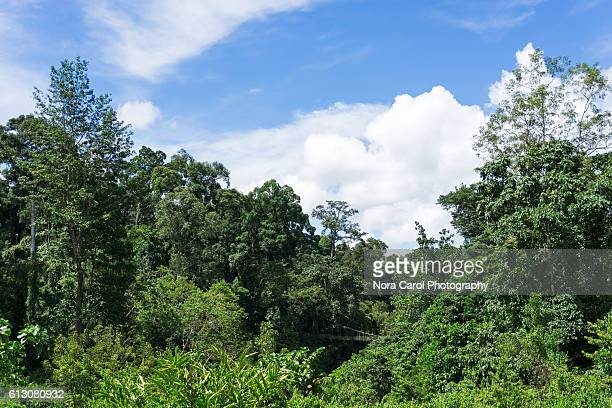 Scenic view of primary rain forest in Borneo