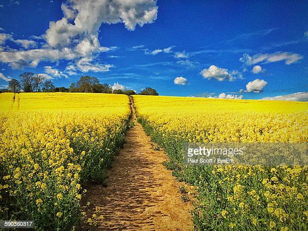 Scenic View Of Rape Field Against Sky