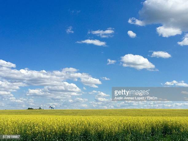 Scenic View Of Rapeseed Oil Field Against Cloudy Blue Sky