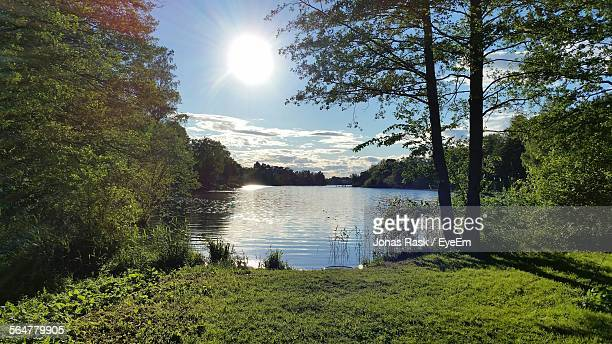 Scenic View Of River By Trees On Sunny Day