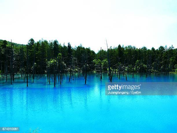 Scenic View Of Shirogane Blue Pond