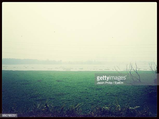 Scenic View Of Swamp During Misty Morning
