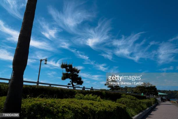 Scenic View Of Trees Against Blue Sky