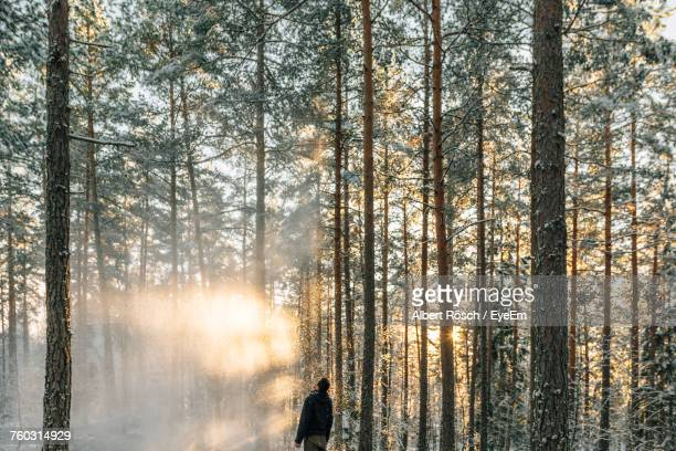 Scenic View Of Trees In Forest During Winter