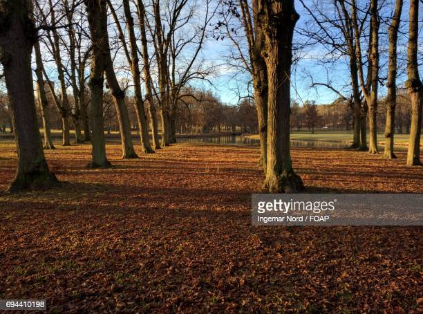 Scenic view of trees in forest