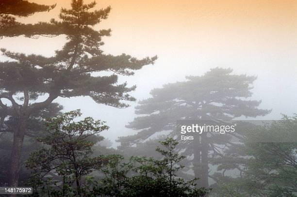 A scenic view of trees in the mist at Mount Huangshan a mountain range in southern Anhui province in eastern China circa 1990