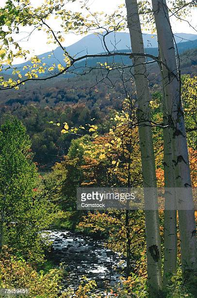 Scenic view of White Mountains , New Hampshire