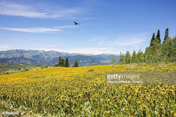 Scenic View Of Yellow Plant Against Sky At Wasatch-Cache National Forest
