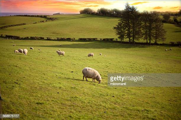 Scenics Irish landscape