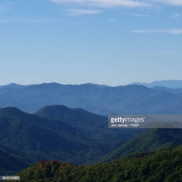 Scenics view of mountain forest