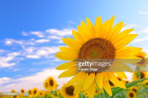 Scent from summer : Stock Photo