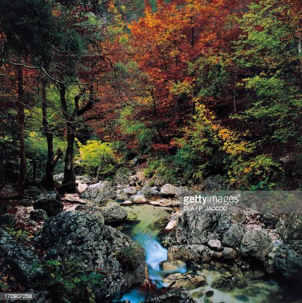 Scerlo River in the Camosciara area Abruzzo Lazio and Molise National Park Abruzzo Italy