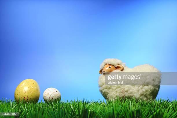 Schaf mit Ostereier auf Rasen vor blauem Hintergrund