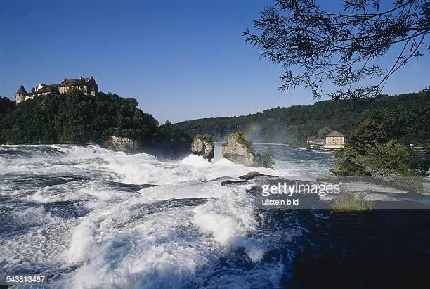 Wassermassen stürzen den Rheinfall den größten Wasserfall Europas hinab Hinter dem Rheinfallbecken mit den charakteristischen Felsen erhebt sich das...