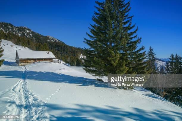 Schneeschuhwanderung in den bayrischen Alpen, Spuren führen zur Almhütte