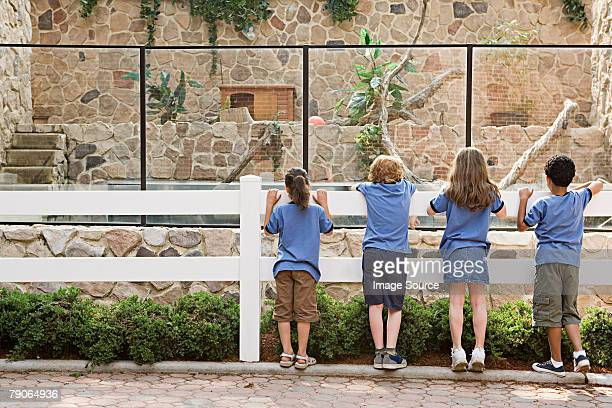 School children looking in enclosure
