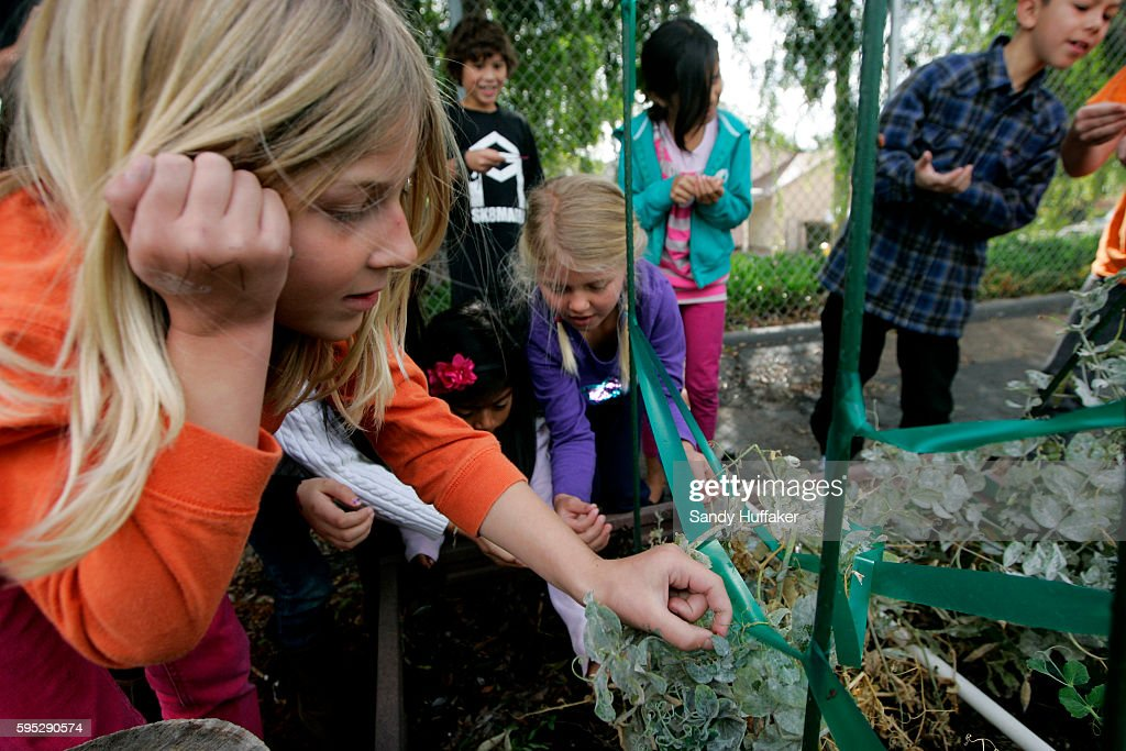 School kids from McKinley Elementary School look at plants in planters at the Octopus Garden on Tuesday March 22 2011 in San Diego CA Gardening has...